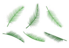 Vetores da folha de palmeira