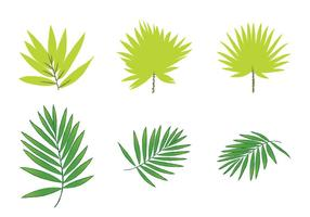Gratis Palm Leaf Vectors