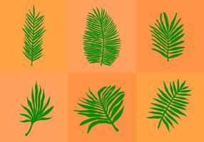 Palm Leaf isoliert