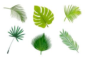 Geïsoleerde vectoren van palmbladeren