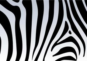 Zebra print vector background