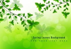 Green spring leaves  vector