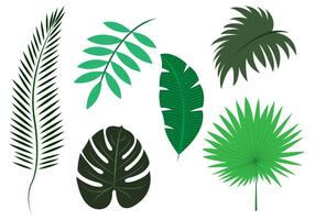 Vector Set of Palm Leaves