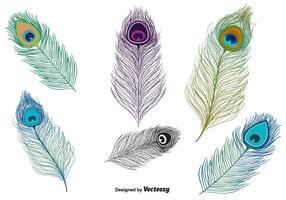 Vector de la pluma del pavo real