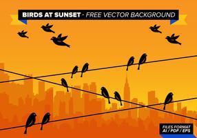Fåglar Vid Solnedgång Gratis Vektor Bakgrund