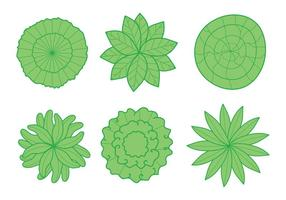 Pflanze Top View Vector