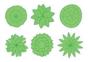 Planten bovenaanzicht vector
