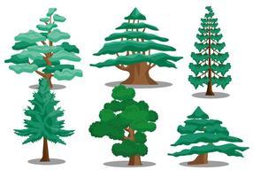 Cedar träd vektorer