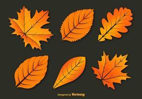Vecteurs colorés des feuilles d'automne