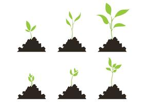 Conjunto de vector de la escala de crecimiento de la planta