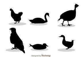 Silueta negra de las aves