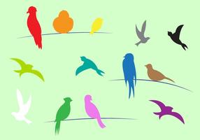 Colorful Birds in Vector