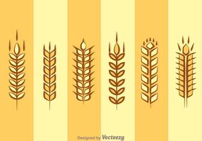 Ear Of Corn Isolated vector