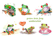 Green tree frog watercolor