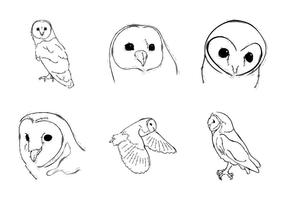 Free Barn Owl Vector Illustration