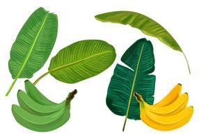 Hojas de plátano Vectores