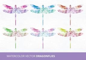 Aquarell Vektor Libellen