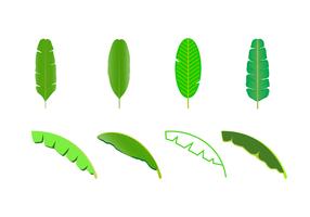 Vector de folha de banana grátis