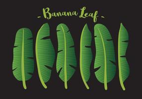 Vektor Banane Blatt