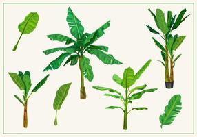 Bananenboomvectoren
