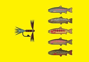 Fliegenfischen Pack 2