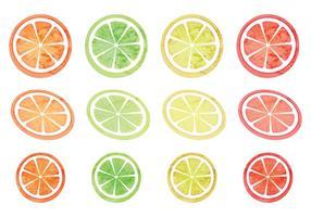 Vector Set of Citruses
