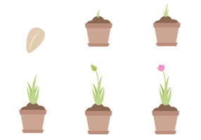 Gratis Plant Life Cycle Vector
