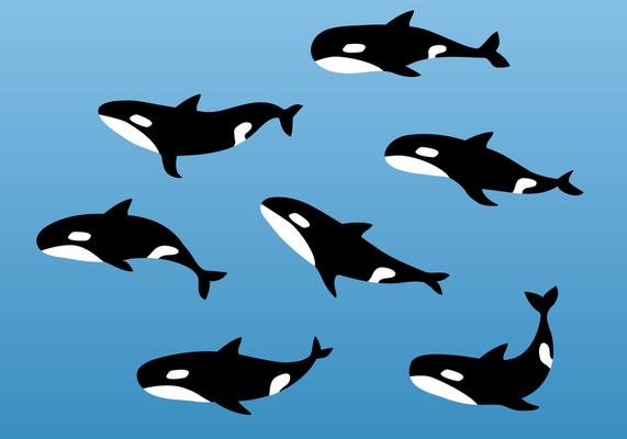 Mean killer whale cartoon