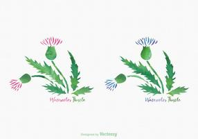 Free Thistle Aquarela Vector