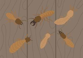 Termitenvektoren