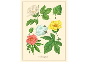 Vintage Cotton Plant Vector