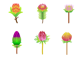 Gratis Protea Vector