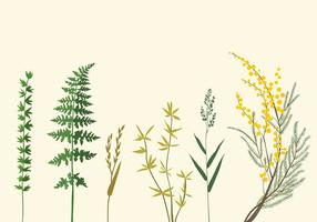 Botanische Illustraties
