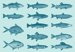 Old Style Drawing Trouts And Fish Vectors