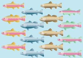 Rainbow Trout Vectors