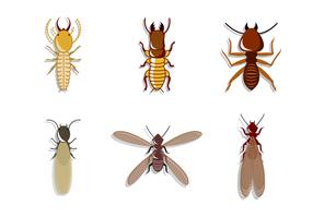 Vecteur de termites gratuit