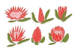 Vecteurs de protea