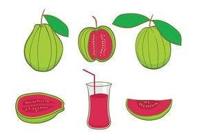 vettore di guava