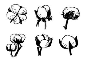 Dibujado a mano vector de la planta de algodón