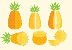 Vetores de Ananas