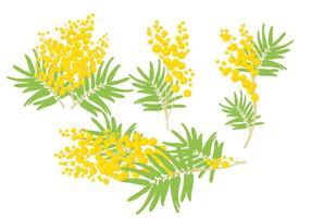 Mimosa Vectores