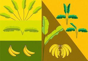Bananträvevektorer