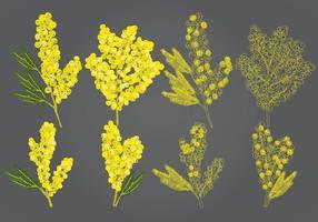 Mimosas vetoriais