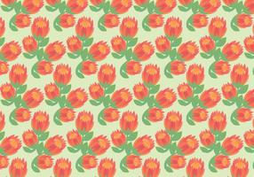 Free Protea Vector Pattern