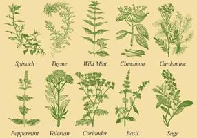 Especiarias e vetores de ervas