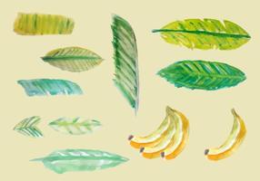 Libere las hojas del plátano del vector de la acuarela