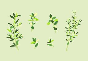 FREE THYME VECTOR
