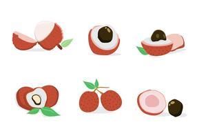 Vecteur de lychee frais