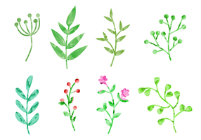 Watercolor Plants Vector