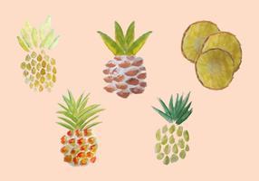Pacote grátis de vetores de ananás de aguarela
